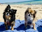 Milly and Pixie's day at the beach. Picture: Zara Shroff