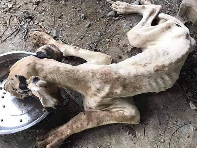 The owner had abandoned the breeding farm and stopped feeding them. Picture: Watchdog Thailand/Facebook