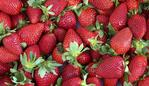 MARKETS: Fresh Strawberries.