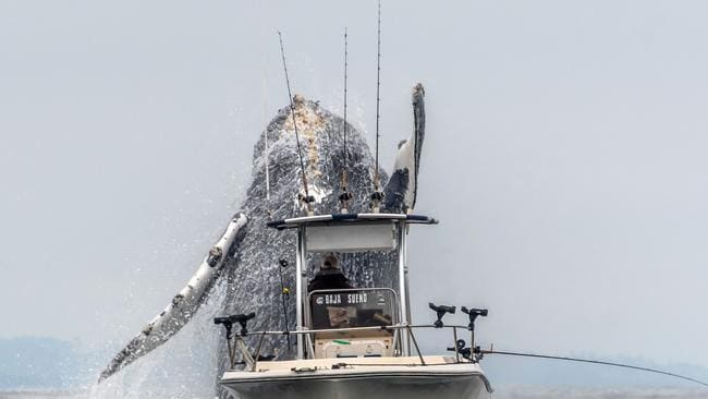 Photographer Douglas Croft, 60, captured the whale shooting up through the water really close to the lone angler.