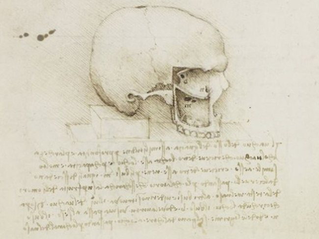 Inside out ... The alabaster skull was very similar in detail, both in omissions and exaggerations, to that of Da Vinci's drawings.