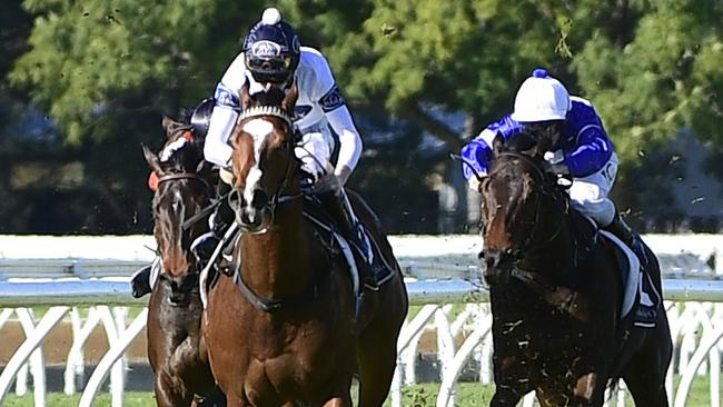 Black Magnum scored a dominant first-up win at Warwick Farm. Picture: AAP