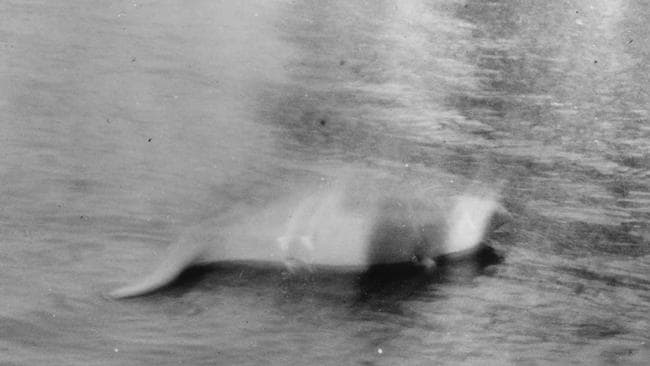 Real or hoax? ... Hugh Gray claimed his 1933 image was the first picture of the Loch Ness monster, but some people say it's just a dog swimming towards the camera.