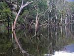 The forest was intentionally flooded in the 1970s as part of the Shoalhaven Hydro-Electric Scheme. Picture: Nicholas Eagar