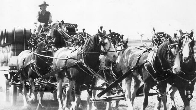 The Clydesdales carting beer in past decades.