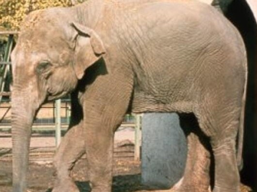 The elephant was thought to suffer from depression. . Picture: Facebook/Zoo de Cordoba