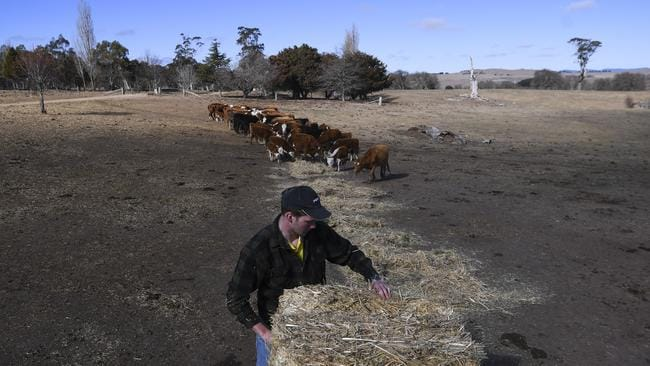 NSW farmer Edward Horan distributes hay to feed cattle on Bedervale farm near Braidwood.