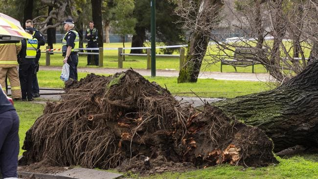 A woman has died after a 106-year-old tree fell in Melbourne. Picture: AAP Image/Daniel Pockett