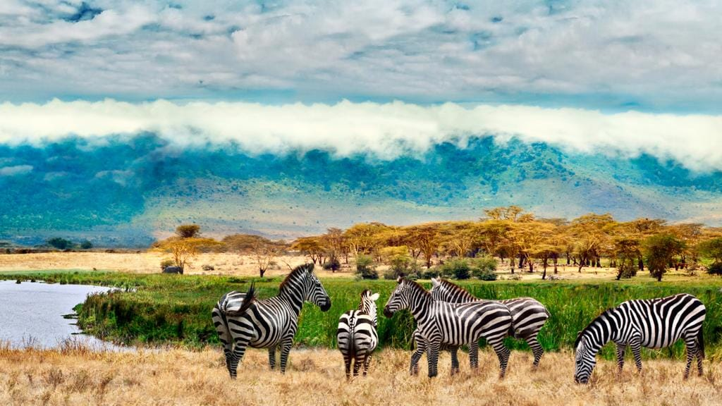 The Ngorongoro crater is filled with wildlife.