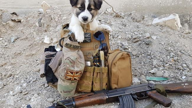 Sean found Barrie in February 2018 in Raqqa, Syria, after hearing whimpering under a slab of concrete near his work site.