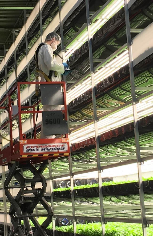 The future of farming? Picture: Casey Higgins/AeroFarms.