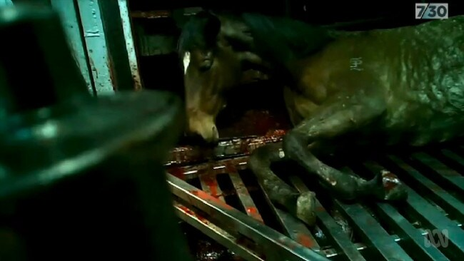 Thousands of thoroughbred racehorses are being sent for slaughter — many abused and inhumanely killed — despite rules preventing just that.