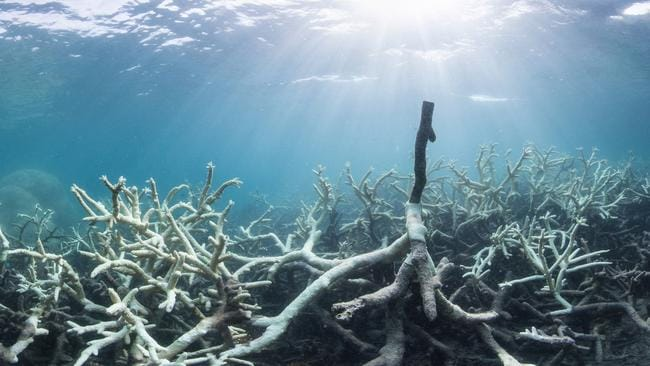 """The Great Barrier Reef Marine Park Authority said that during 2016 the reef died """"due to the worst mass bleaching event on record""""."""