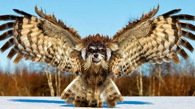 These Photoshop animal mashups will give you nightmares