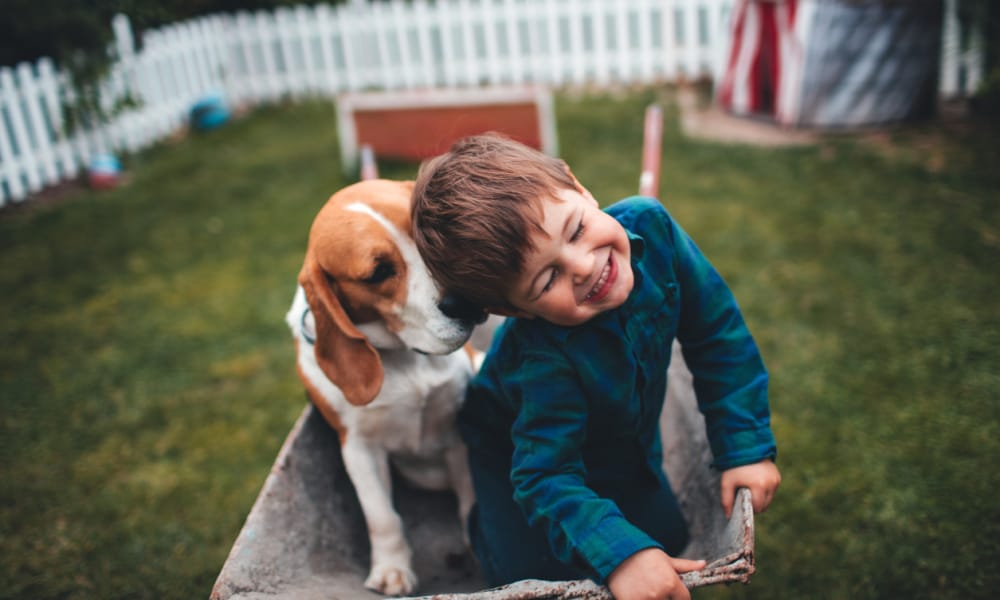The three things your child needs to do when a dog suddenly attacks