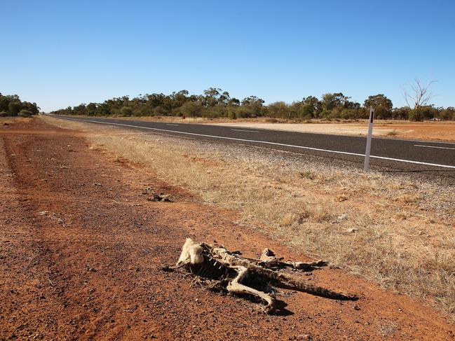 Road kill near Walgett on the barren land. Picture: Sam Ruttyn