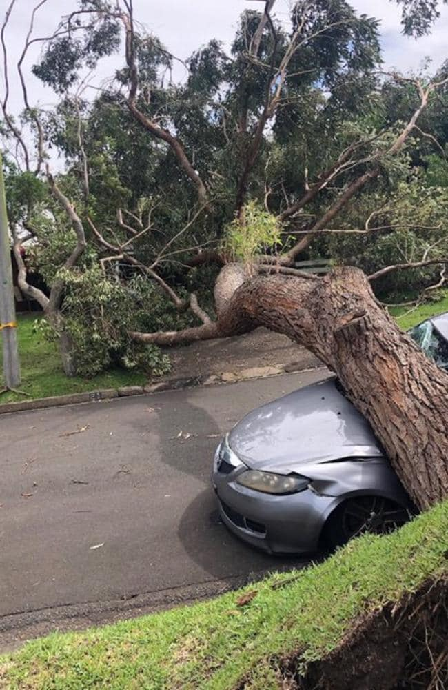 Clearing fallen trees and other debris is Ausgrid's main focus in restoring power to affected homes and businesses. Picture: Ausgrid