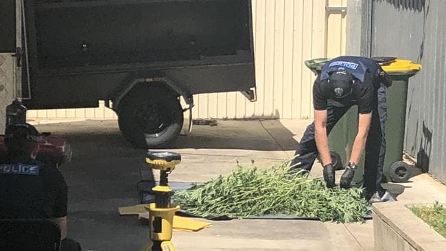 Police with what appear to be cannabis plants on the property where the man's body was found. Picture Ben Harvy/The Advertiser.