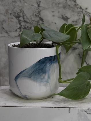 The lonely pot plant Neale Whitaker also slammed. Poor pot plant. Picture: The Block/ Channel 9