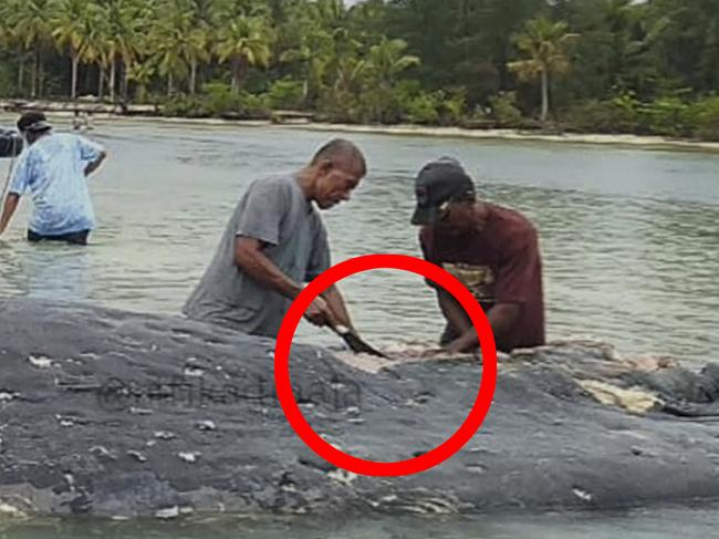 Villagers search through the whale's stomach. Picture: Muhammad Irpan Sejati Tassakka