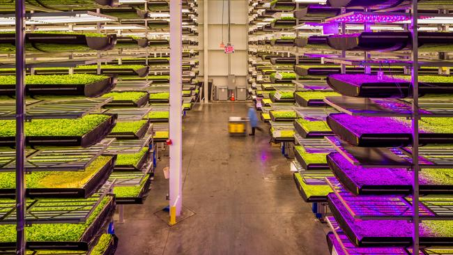 Leafy greens being grown inside an indoor vertical farm in the US run by AeroFarms. Picture: Casey Higgins/AeroFarms.