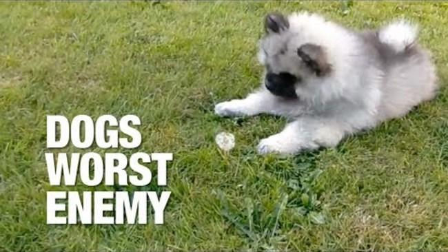 Dogs Get Scared by the Weirdest Things