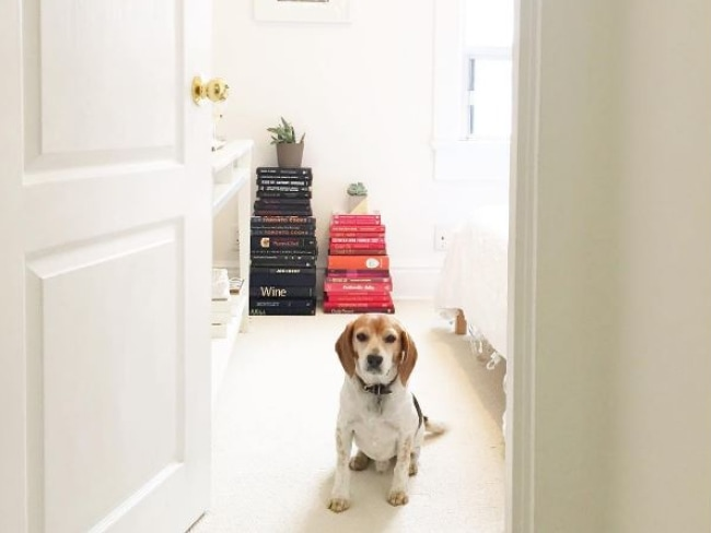 Guy the beagle at his old home in Toronto. Photo: Instagram