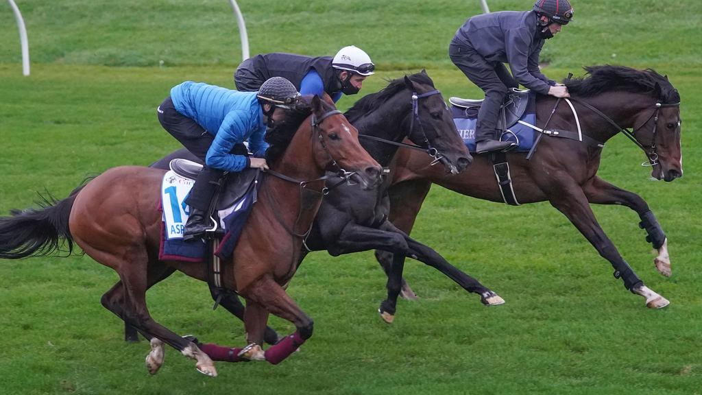 Cox Plate runners Aspetar (outside) and Sir Dragonet (middle) work alongside Thought Of That (inside) at The Valley last Saturday morning. Photo: Scott Barbour/Racing Photos via Getty Images.