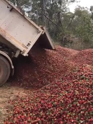 Donnybrook Berries has been forced to dump its stock. Picture: Stephanie Chheang
