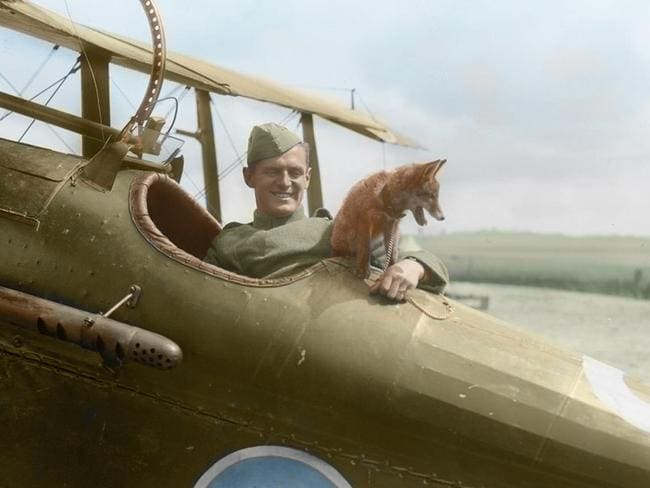 Hunting the enemy ... the fox mascot of No. 32 Squadron in France.