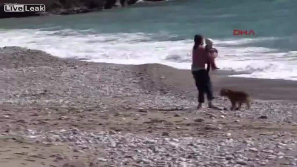 Dog saves baby crawling to sea