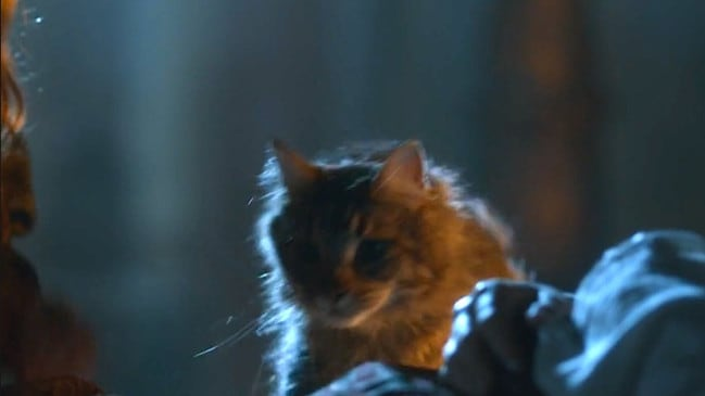 Ser Pounce suffered a terrible fate.