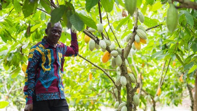 Oheno Baofo, of the Atta ne Atta community, says the Cocoa Life program has bolstered his income.
