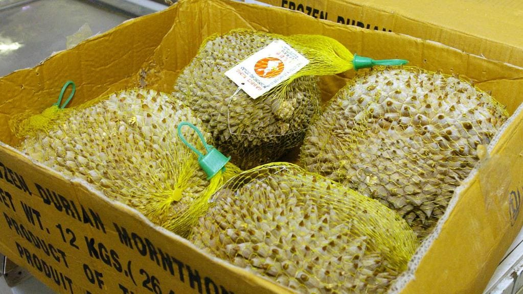 rmit evacuation stinky rotting durian caused mass evacuation