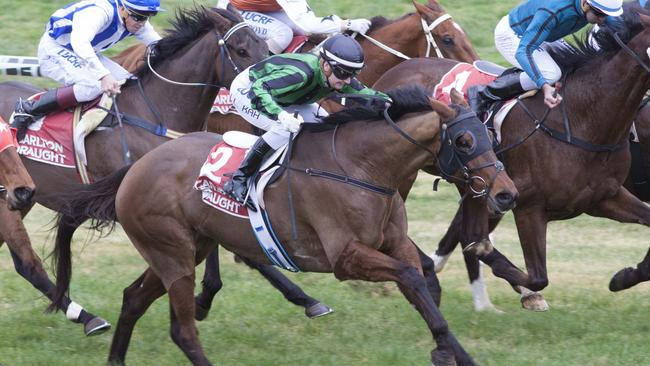 Jake Stephens hopes Dollar Dollar Bill can deliver a third Balaklava Cup for the stable. Picture: Atkins Photography