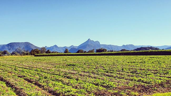 Mt Warning attracts an estimated 100,000 visitors annually and is a popular hiking spot.