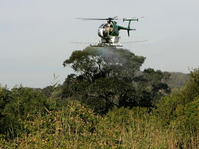 The aerial spraying program happens annually. Picture: Stephen Cooper