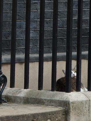 Larry, the Downing Street cat, not caring. Picture: AFP