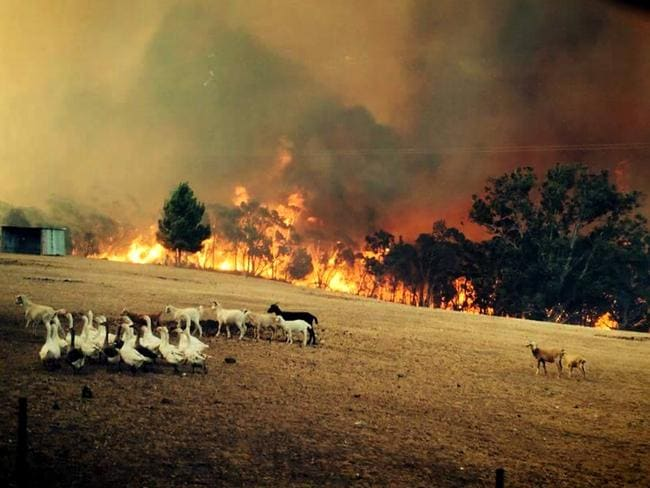 Horrid conditions ... South Australia is bracing for the worst fire conditions since the 1983 Ash Wednesday disaster. Picture: ABC TV/Twitter
