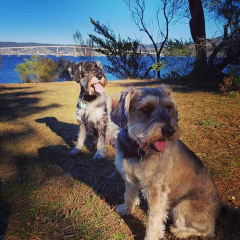 More great pictures of readers' dogs | Adelaide Now