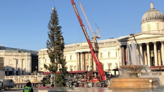 Trafalgar Square Christmas Tree Labelled 'drab' By