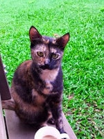 Lilly enjoying the serenity (3 legged & proud). Picture: Rylee Broes. Cutest cats in Pine Rivers.
