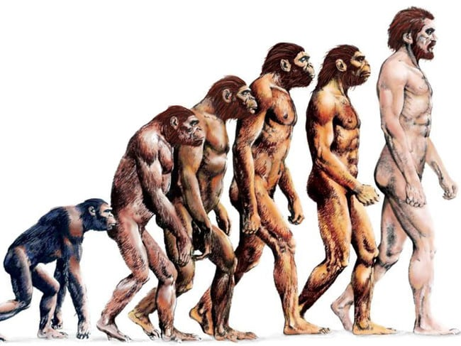 The common depiction of the evolution of man from a chimp. While evocative, it's not entirely accurate.
