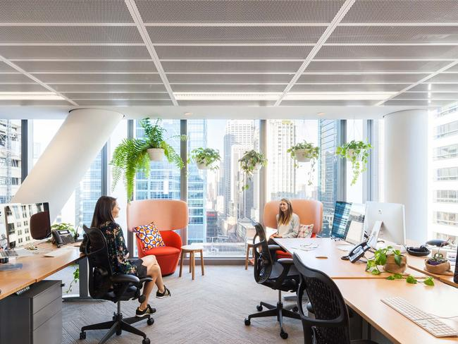 Large windows and plants give the office an airy feel, and all desks can be raised and lowered.