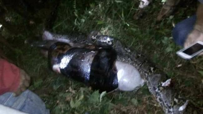 Man cut out of python in shocking video