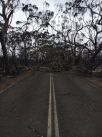 Trees down over a road. Picture: Garth Miller