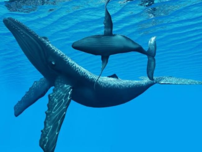 This Humpback baby hangs left. Picture: iStock