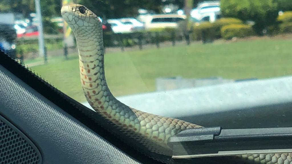 Image result for snake in car