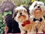 Tobi, Max and Bailey, all dressed in their best for date night. Picture: Jacky Dale/Facebook
