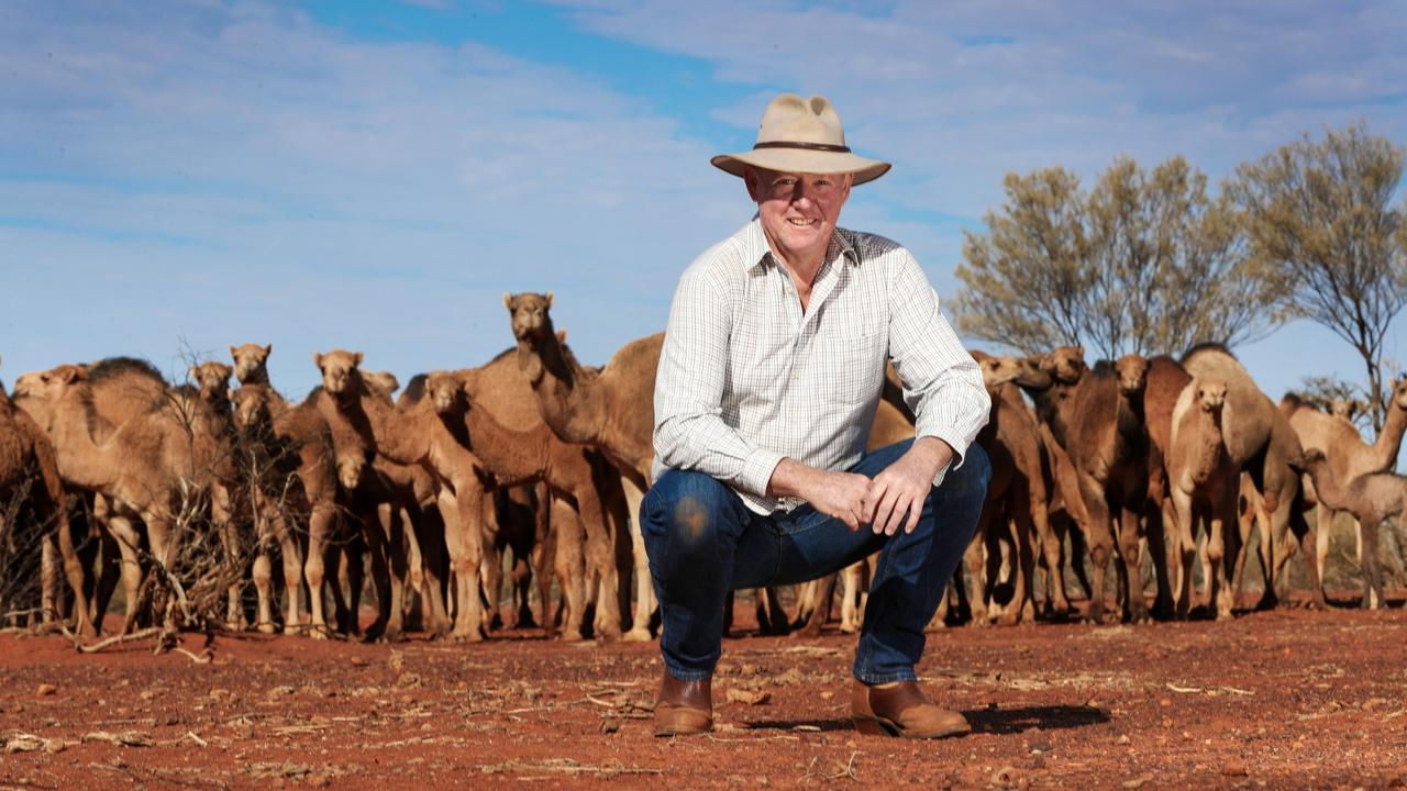 Tony Lovell with some of the camels on his property. Picture: Nigel Hallett